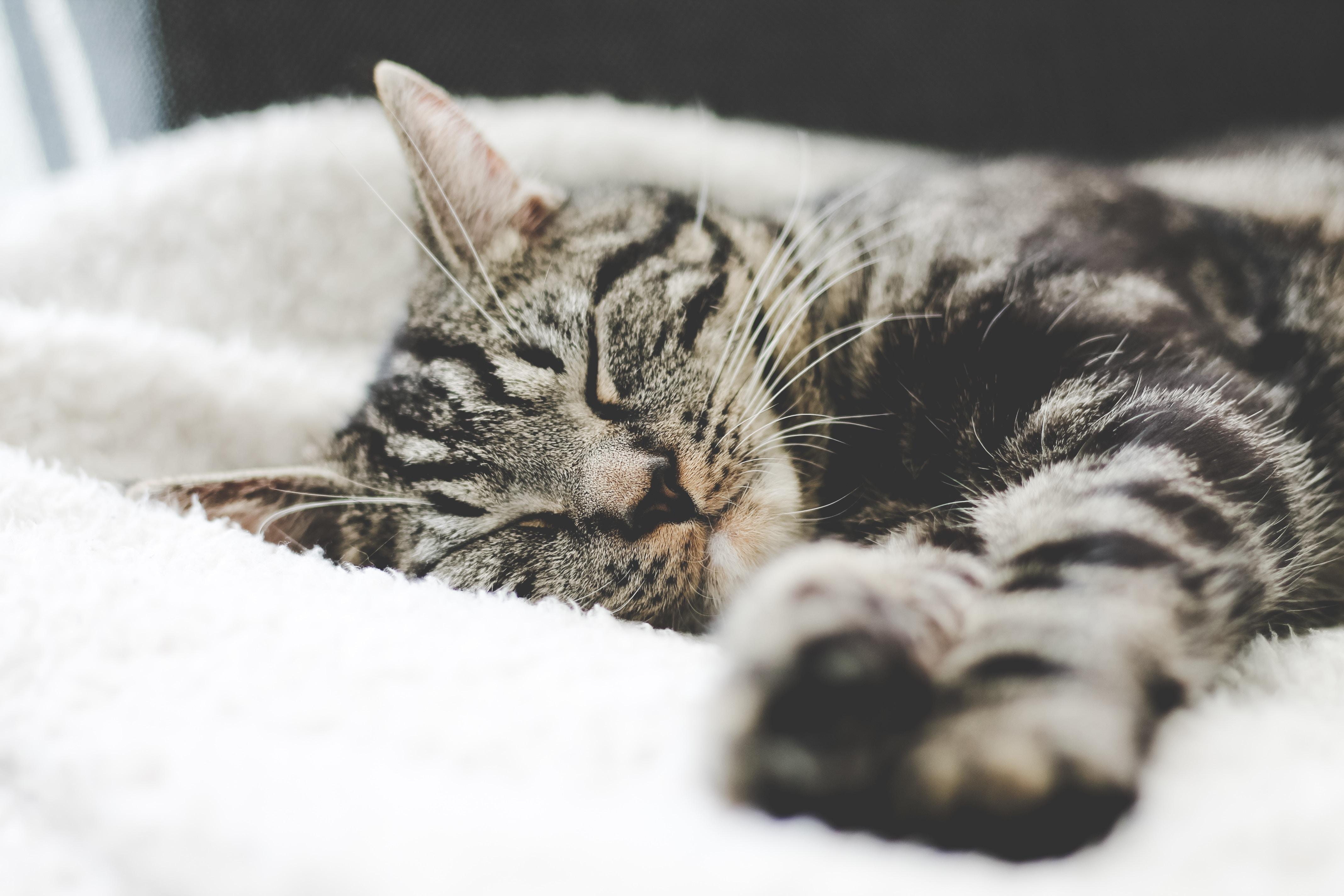 Allergie Planten Huid : Allergie bij honden en katten: atopie wellopet