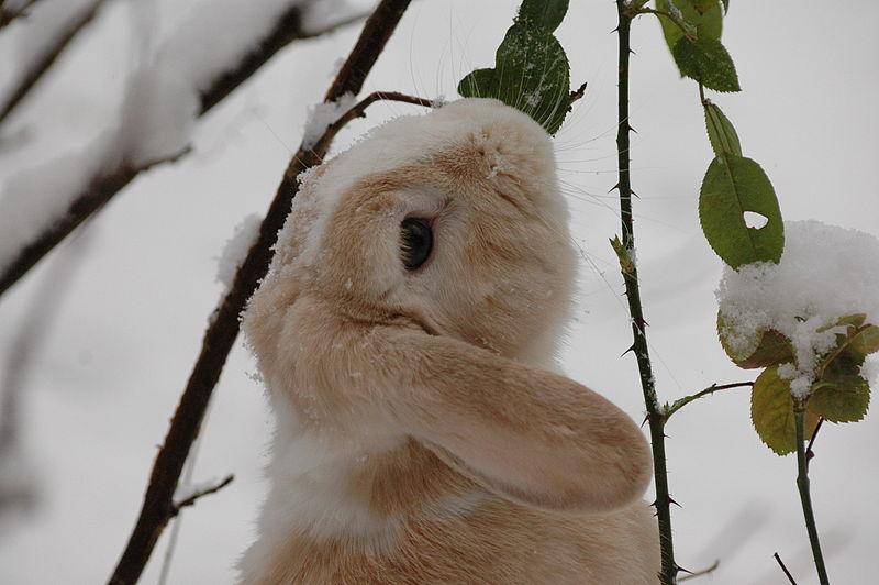 konijn-sneeuw-bladeren.jpg