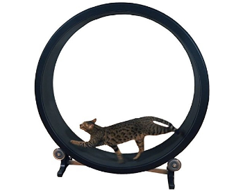 one fast catwheel350x275.png