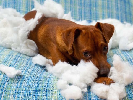 naughty-puppy-chew-stuffing_1.jpg