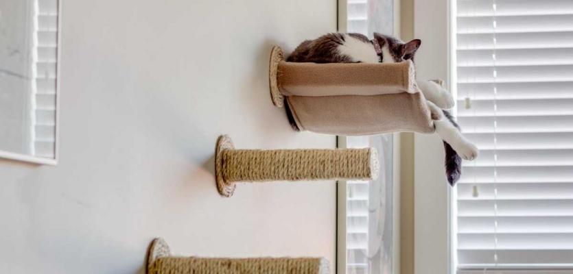 Catify 10 Tips Om Je Huis In Te Richten Op Maat Van De Kat