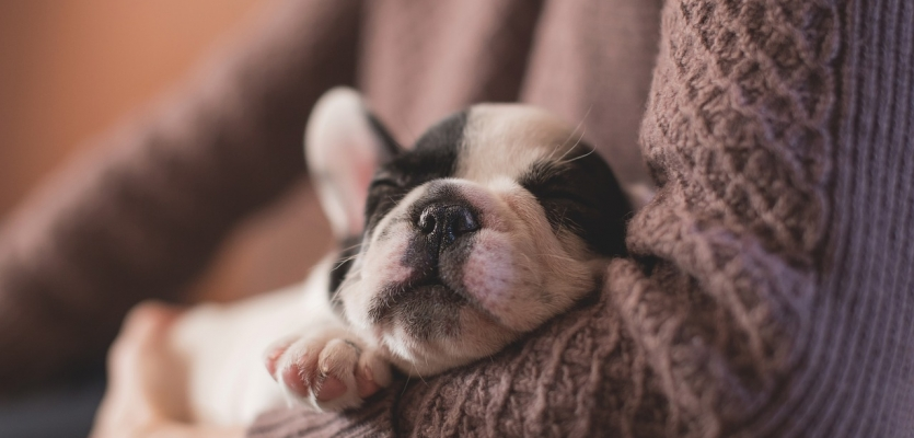 sleepy-puppy