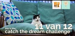 Catch The Dream Challenge n° 11