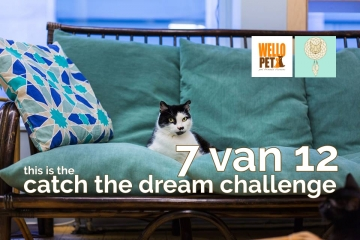 catch the dream challenge win een cat tipi