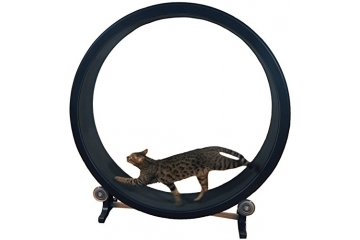 one_fast_cat_wheel